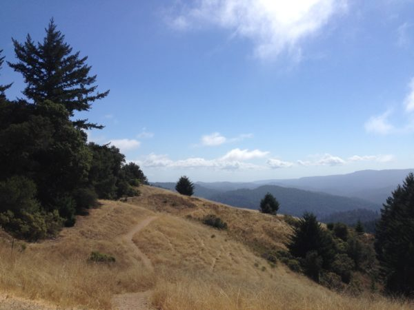 Portola Redwood National Park